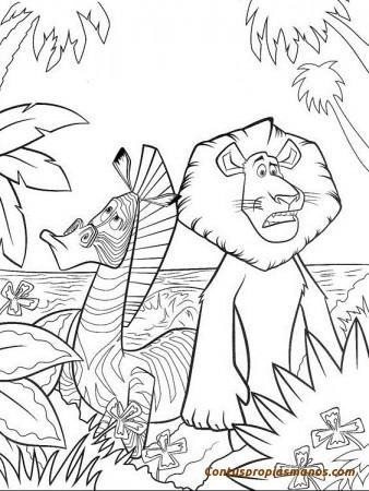 madagascar-lion-alex-zebre-marty (1)